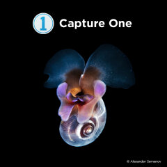 Capture One Pro 20 Fujifilm